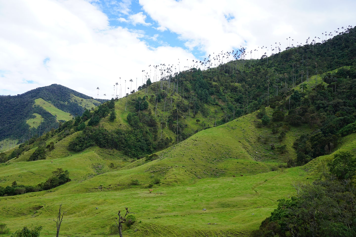Cocora vallei hike - tips en tricks