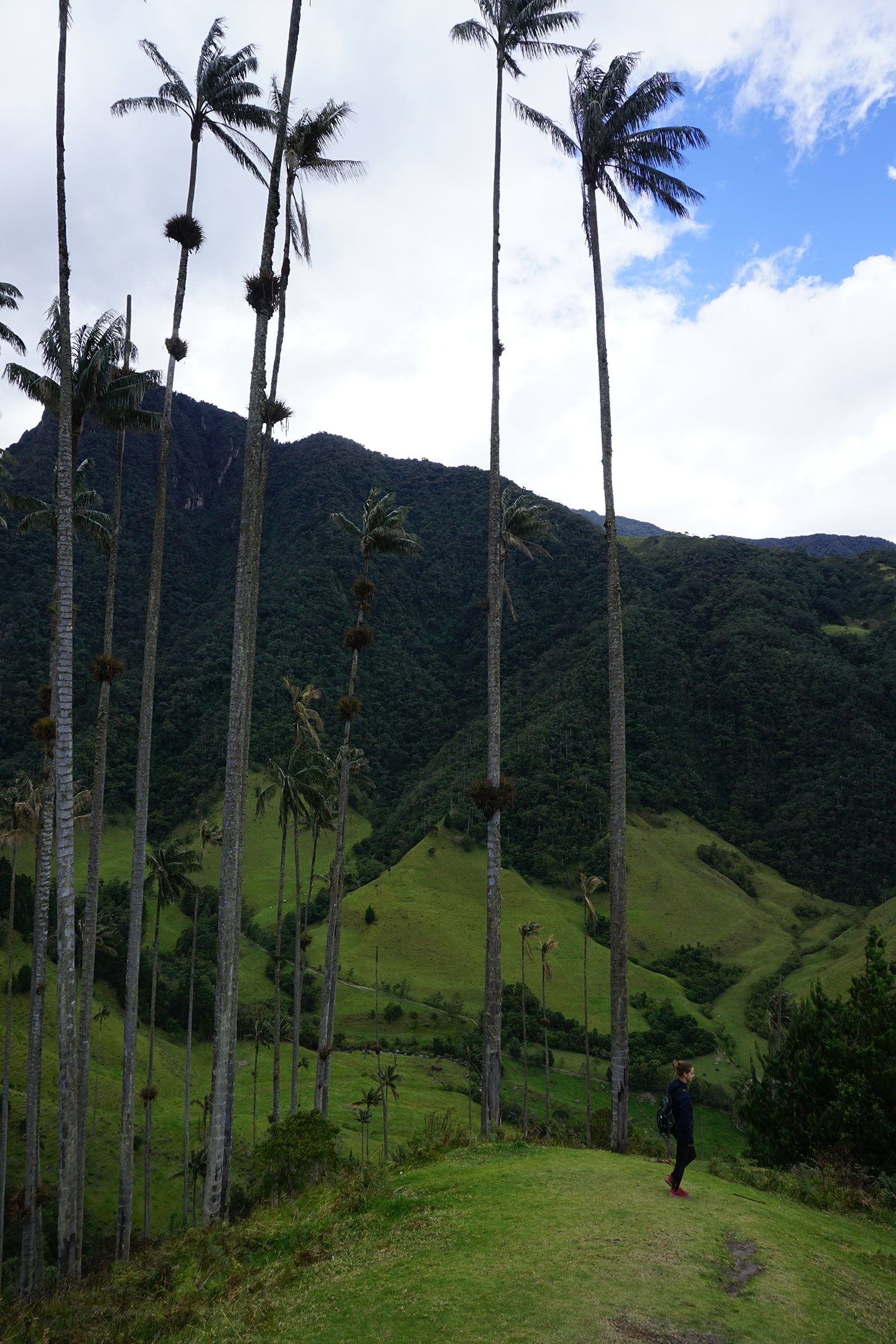 Cocora vallei - backpacken in Colombia