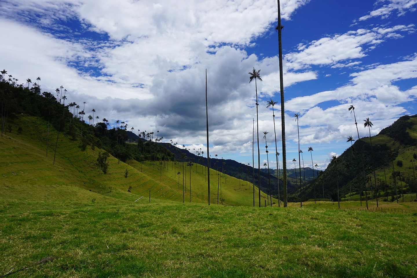 Valle de Cocora - highlight Colombia
